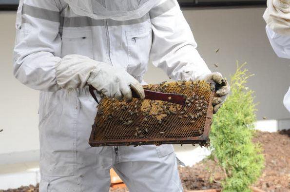 Komisja Europejska o ochronie pszczół