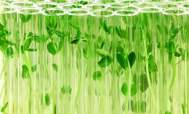 biogospodarka